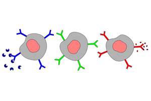 antibody-and-antigen